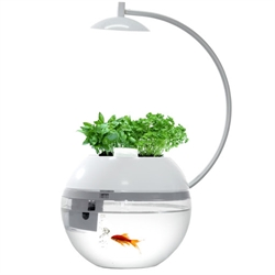 Herb & Fish Connect